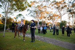 Wedding Pony Rides child on pony